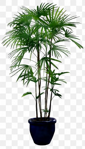 Plants Palm Trees Image Flowerpot PNG