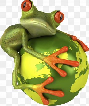 Frog - Frog Royalty-free Wallpaper PNG