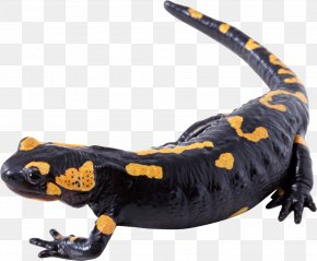 Lizard - Lizard Yellow Black White PNG