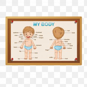 Vector Boy Body - Human Body Royalty-free Anatomy Stock Photography PNG