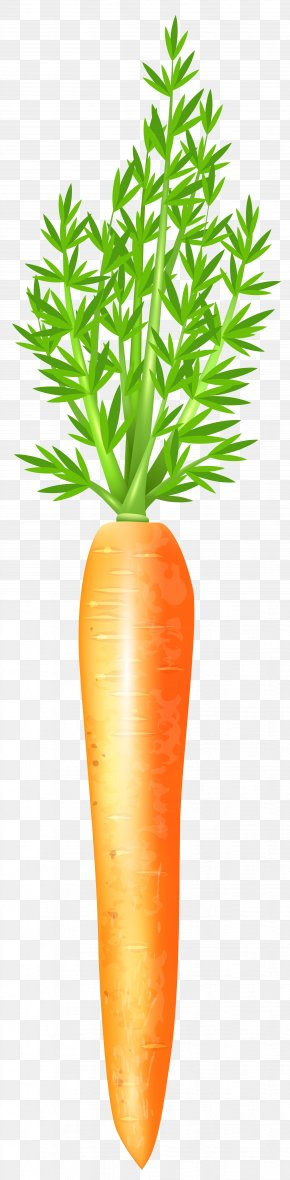 Carrot Free Clip Art Image - Carrot Clip Art PNG