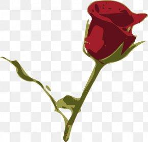 Dahlia/ - Garden Roses Petal Flower Clip Art PNG