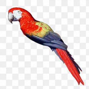 Pirate Parrot - Pirate Parrot Bird Parakeet Clip Art PNG