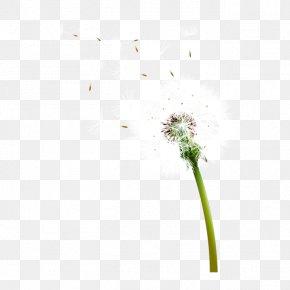 Dandelion Seeds - Common Dandelion Euclidean Vector Icon PNG