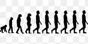 Human Evolution - Human Evolution Homo Sapiens Neandertal Bipedalism PNG