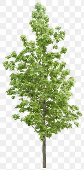 Forest Trees - Tree Forest Vegetation PNG