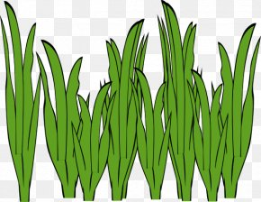 Sea Plants Cliparts - Seaweed Algae Ocean Clip Art PNG