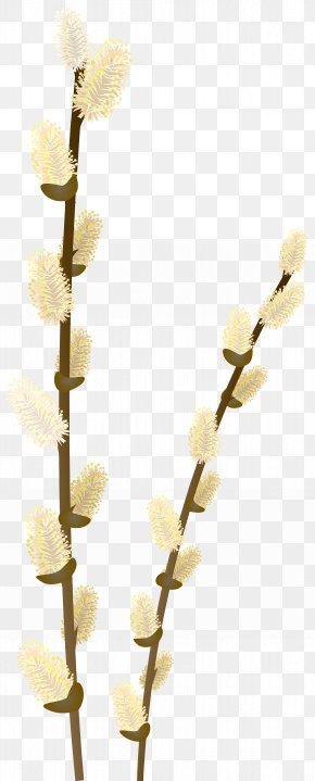 Willow Tree Branch Transparent Clip Art Image - Branch Weeping Willow Tree Clip Art PNG