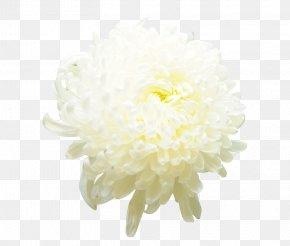 Chrysanthemum Flowers Picture Material - Chrysanthemum Xd7grandiflorum Cut Flowers Icon PNG