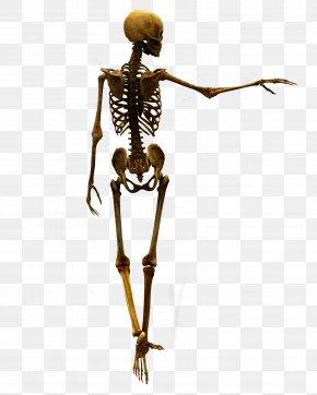 Bones - DeviantArt Stock Skull PNG