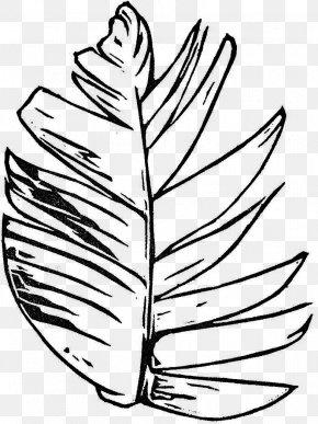 Leaf - Leaf Flowering Plant Line Art Clip Art PNG