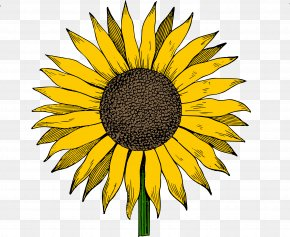 Vintage Daisy Cliparts - Common Sunflower Free Content Clip Art PNG