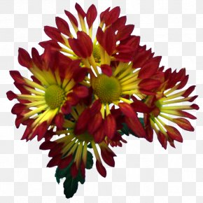 Albert Camus - Blanket Flowers Chrysanthemum Transvaal Daisy Floral Design Cut Flowers PNG