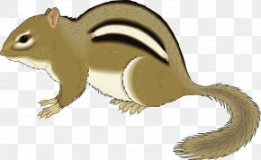 Brown Squirrel - Chipmunk Squirrel Rodent Clip Art PNG