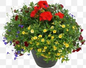 Flowerpot - Fundraising Flowerpot Houseplant PNG