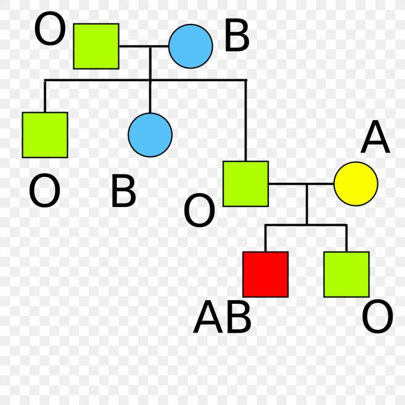 Rh- blood type
