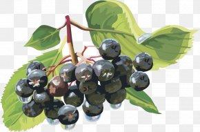 Vector Lantern Fruit Blueberry Fruit,blueberry - Berry Clip Art PNG