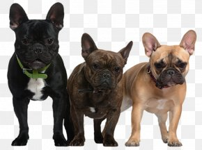 Transparent Dogs Picture - French Bulldog Newfoundland Dog Puppy PNG