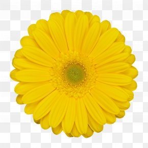 Flower - Flower Stock Photography Stock.xchng Clip Art Image PNG