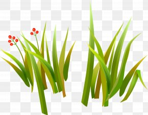 Herbaceous Plant Drawing Common Daisy Clip Art PNG