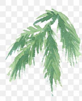 Vascular Plant Flower - Tree Plant Leaf Woody Plant Flower PNG