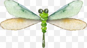 Pretty Dragonfly - Dragonfly Insect Data Compression PNG