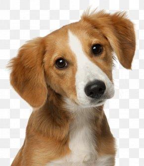 Cat - Cat Dog Veterinarian Pet Veterinary Medicine PNG