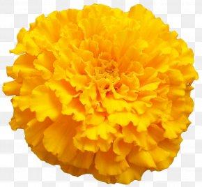 Bright Flowers - Mexican Marigold Orange Color Clip Art PNG
