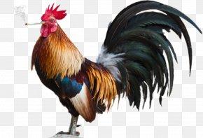 Cochin Chicken Rhode Island Red Leghorn Chicken Rooster Poultry PNG