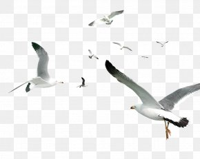 White Simple Seagull Flying Bird Decorative Pattern - Flying Bird Gulls Flocks PNG