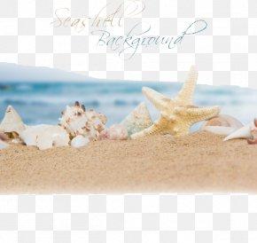 Ocean Beach - Beach Sand Ocean Seashell PNG