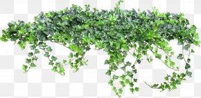 Ivy Fairy Tale - Texture Vine PNG