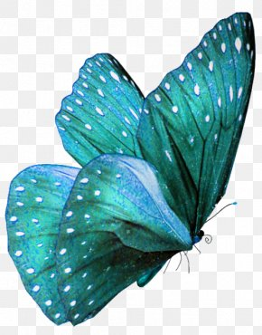 Watercolor Butterfly - Butterfly Teal Turquoise Color Morpho PNG