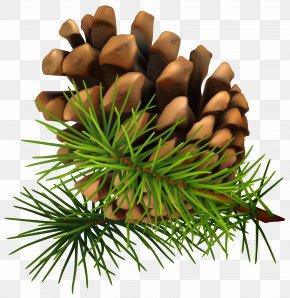 Pine Cone Clip-Art Image - Conifer Cone Pine Clip Art PNG