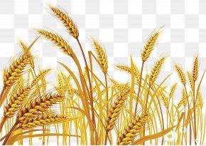 Wheat - Wheat Euclidean Vector Cereal Clip Art PNG