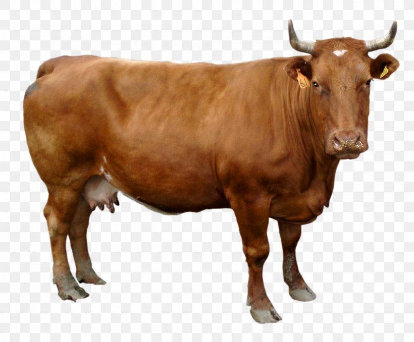 Holstein Friesian Cattle Wallpaper Png 2040x1689px Holstein Friesian Cattle Bull Cattle Cattle Like Mammal Cow Goat