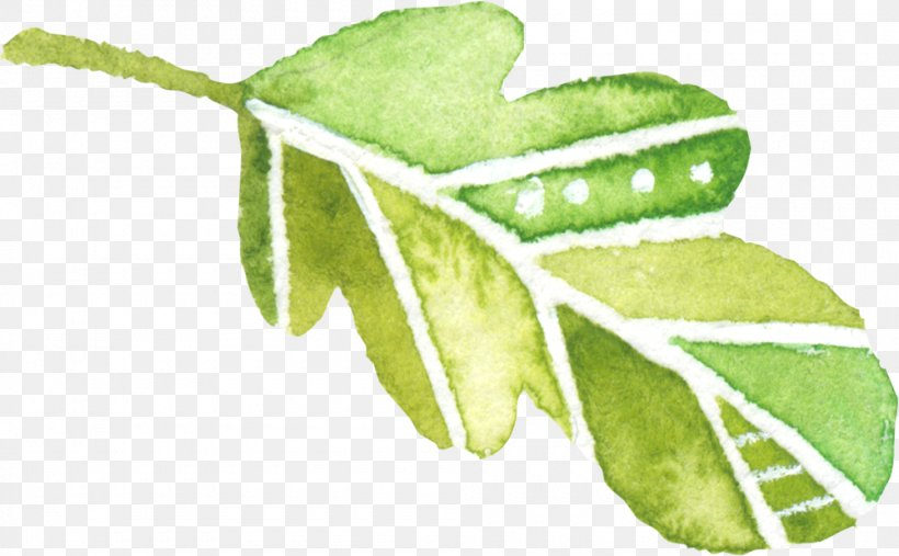 Leaf Watercolor Painting Green, PNG, 1000x619px, Leaf, Branch, Color, Green, Herbalism Download Free