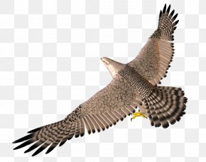 3D Flying Eagle - Bird Wing 3D Computer Graphics PNG