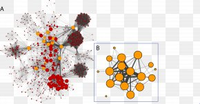 Social Network - Cytoscape Social Network Analysis Computer Network Visualization PNG