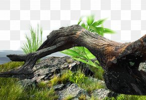 Old Tree Stump Grass Material - Tree Stump Trunk Euclidean Vector PNG