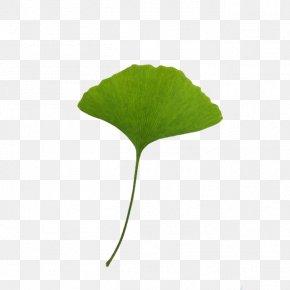 Leaf - Leaf Ginkgo Biloba Download Clip Art PNG