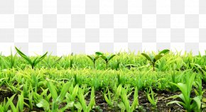 Background Material For Free Dig Plants Sprout PNG