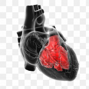 Figure Shows The Human Heart PNG