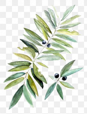 Drawing Blueberries - Watercolor Painting Botanical Illustration Leaf PNG