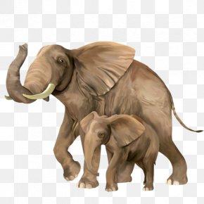 Elephant - Indian Elephant Clip Art Vector Graphics PNG