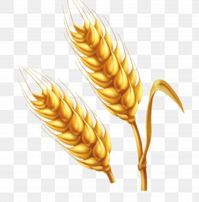 Cartoon Farm Golden Wheat Vector - Wheat Cartoon Illustration PNG