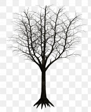 Dark - Tree Branch Woody Plant Twig PNG
