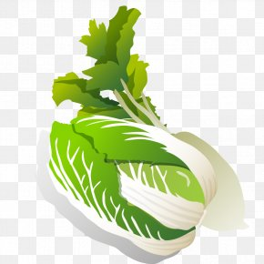 Creative Cabbage - Leaf Vegetable Daikon Turnip Napa Cabbage Chinese Cabbage PNG