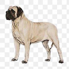 Giant Dog Breed American Mastiff - Dog Dog Breed Bullmastiff English Mastiff American Mastiff PNG