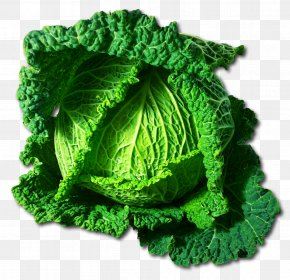 Cabbage - Savoy Cabbage Vegetable Food Clip Art PNG